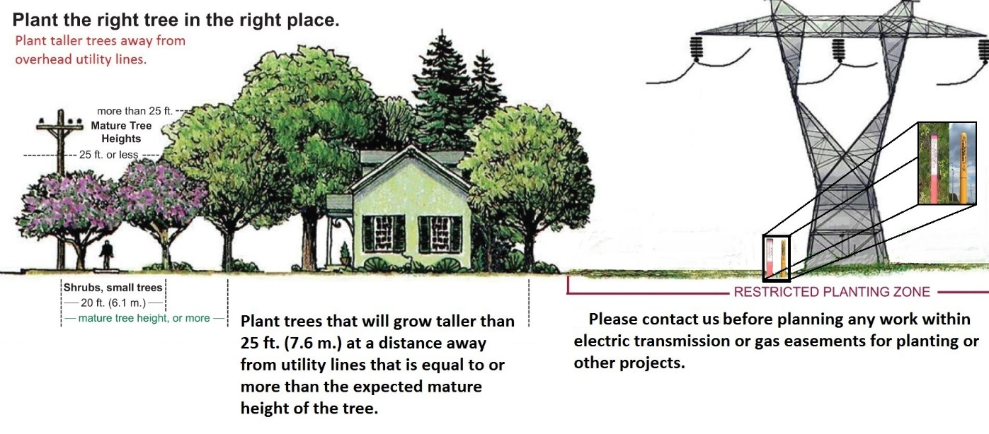 Plant the Right Tree in the Right Place   Pepco - An Exelon