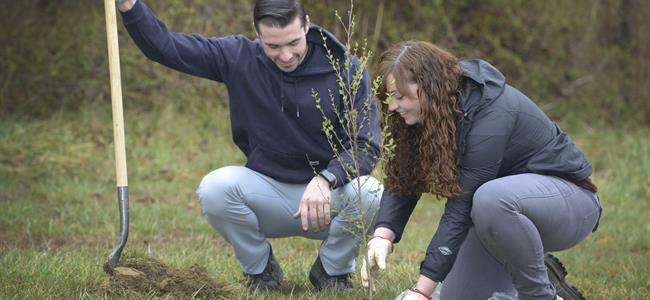 Planting Energy Saving Trees